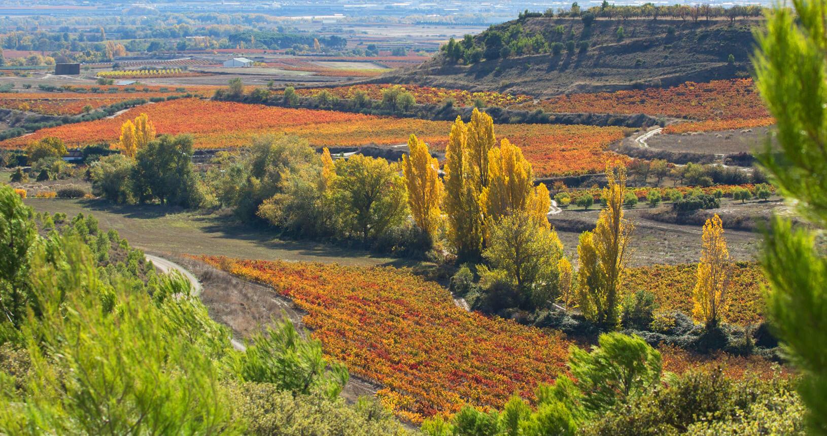 Viñas de las Bodegas Ondarrre