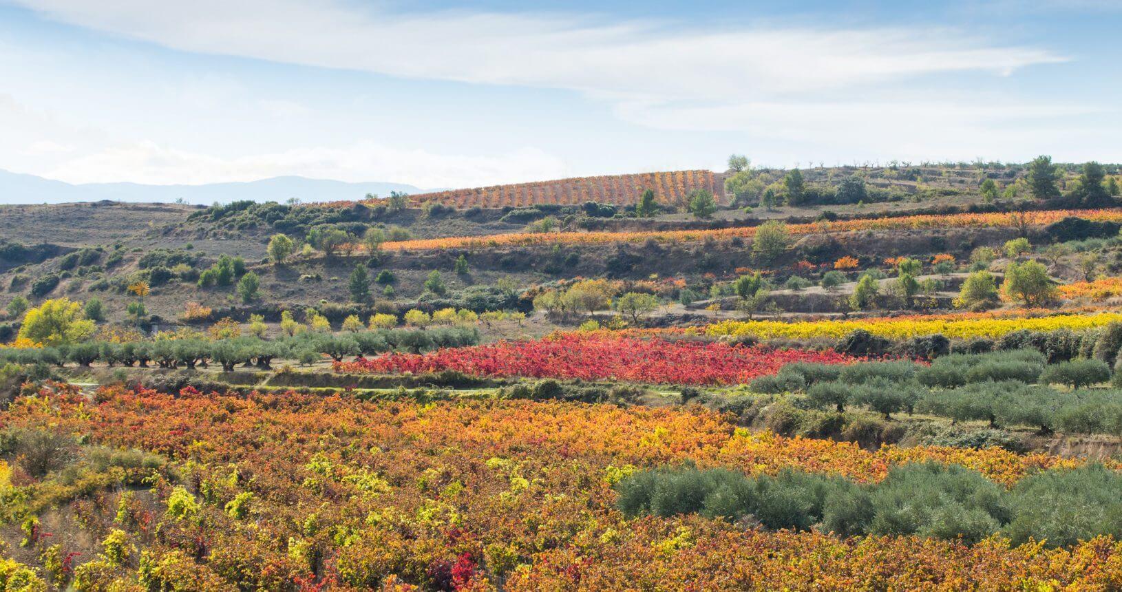 Viñas y viñedos del Grupo Olarra